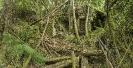 Caldeira de aserradeiro en ruínas.