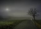 Camiño con néboa e árbore.